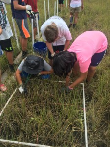 student research using transects