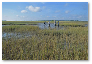scientists in marsh