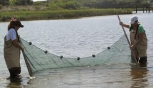 Seining in Lake Guana