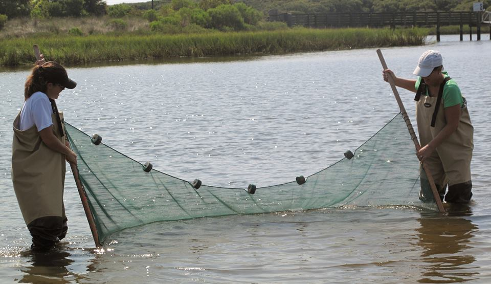 Seining in Lake Guana