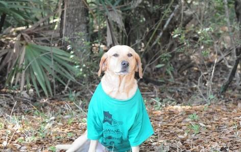 Pet on trail