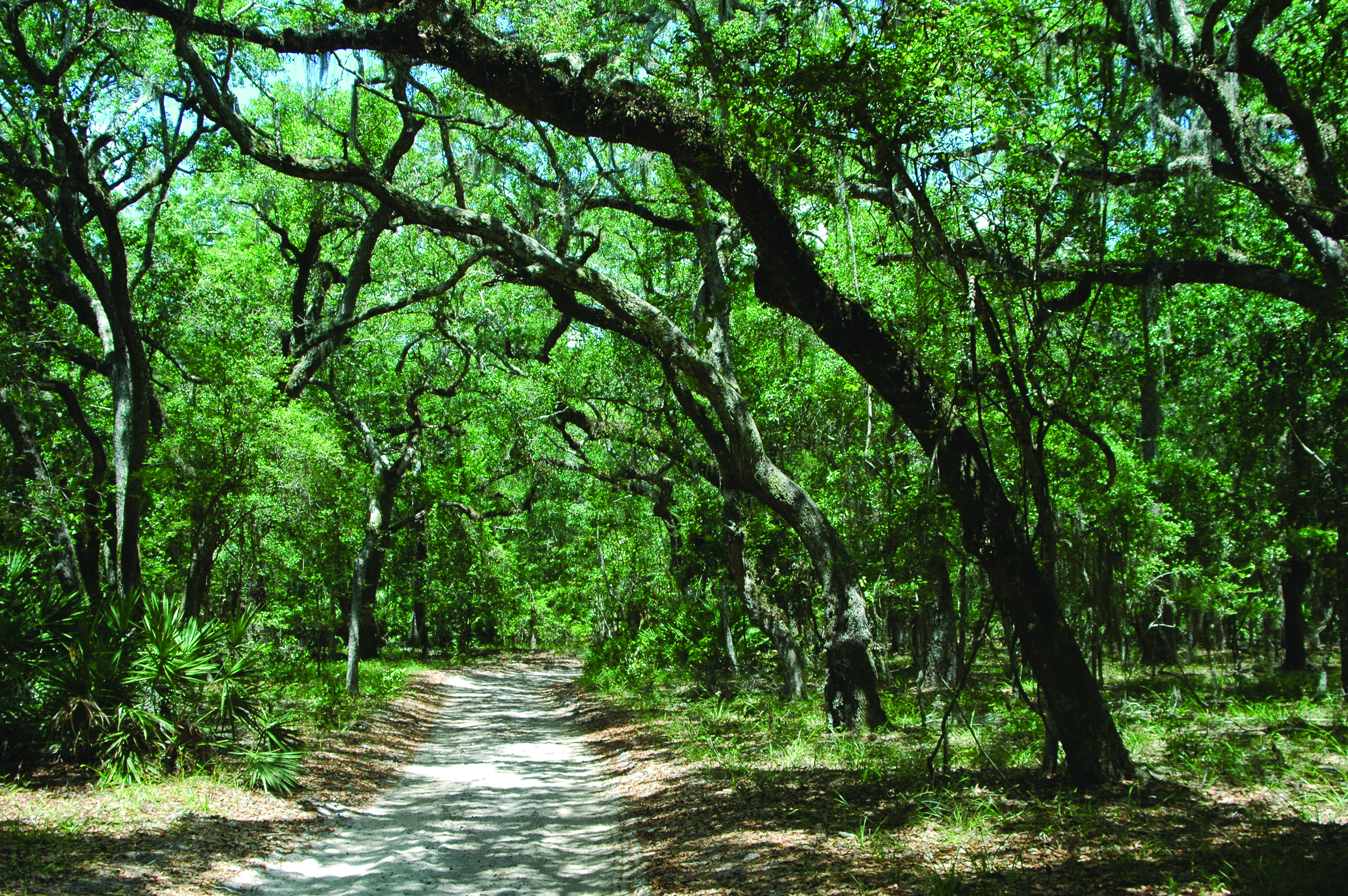 hike the GTM trails