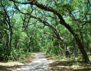 GTM Trail hike